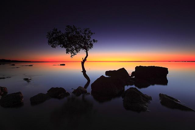 Amazing silhouette photo