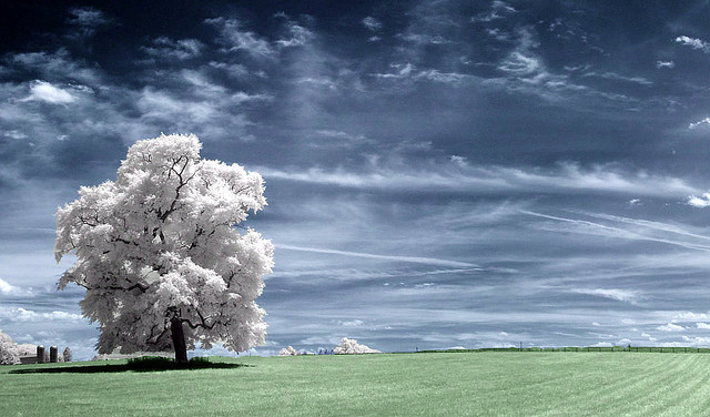 infrared_photo_tree